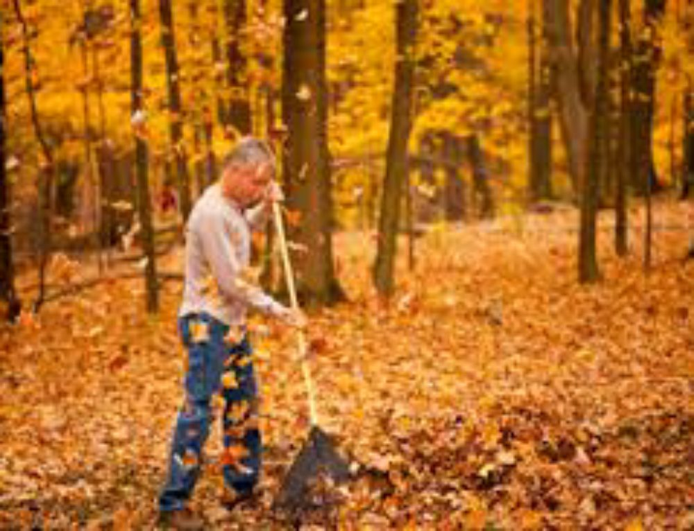 10 Tips to Contain Leaves this Fall